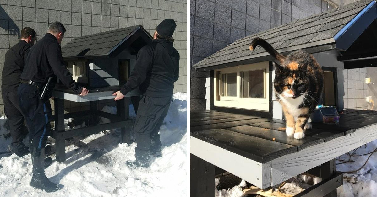 Stray Cat Kept Coming To Police Department, So Cops Built Her A 'Cat Condo'