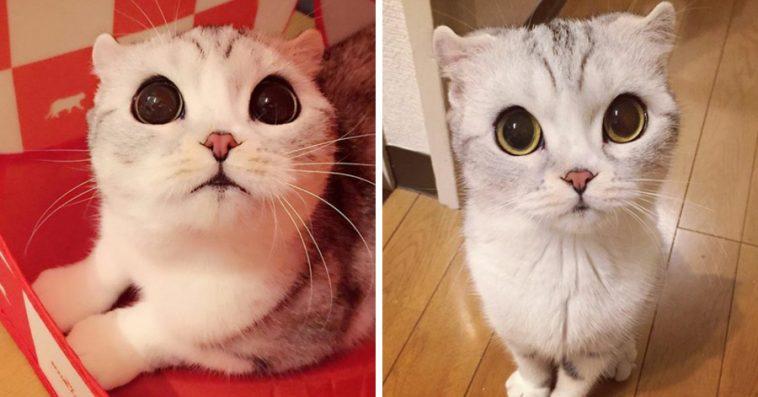 Meet Hana, The Japanese Kitten With Eyes So Big She Looks ...