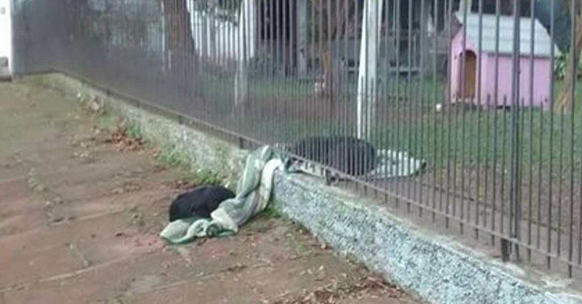 8-Month-Old Puppy Drags Her New Blanket Outside To Share It With A Cold Homeless Dog