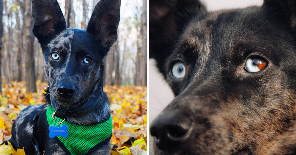 Meet Luna The Dog With A Quot Moon Quot Eye The Internet Is