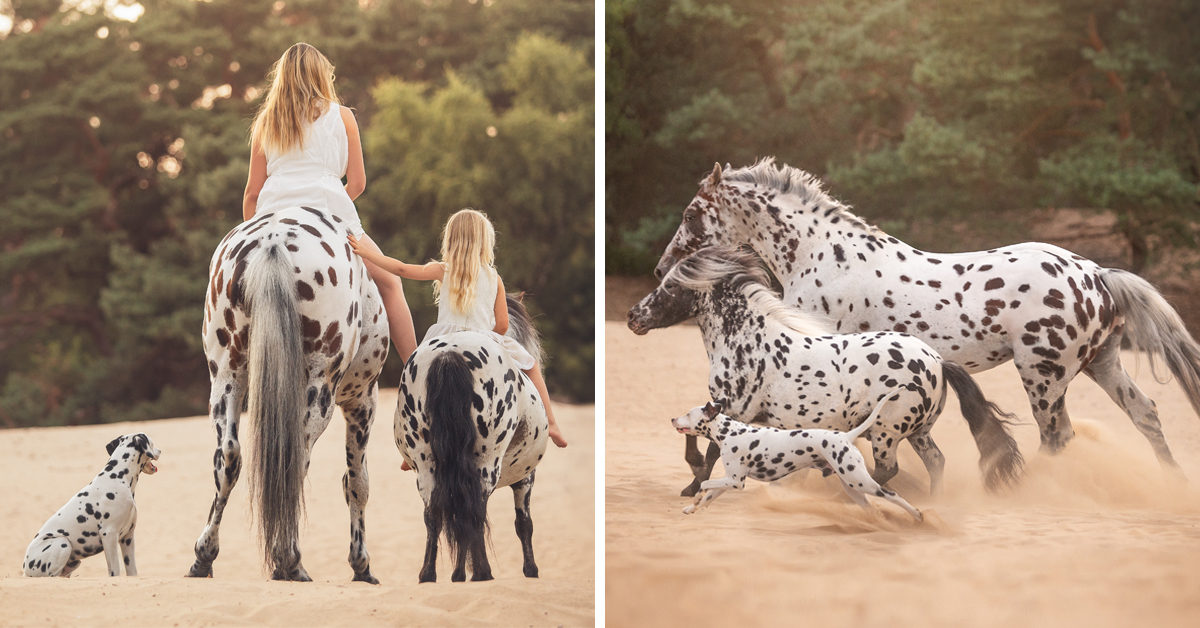 "This Dog Is The ""Third Wheel"" In A Horse Family, And Their Photos Are Adorable"