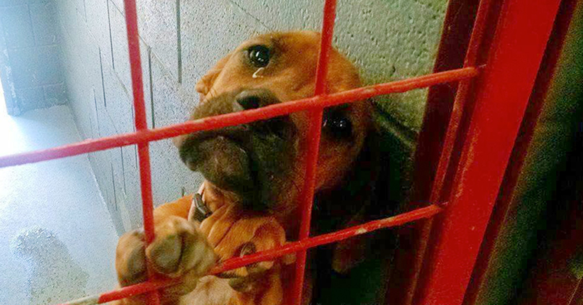Dog Cries Every Night As No One Wants To Adopt Her, Shelter Shares Her Photo As Last Hope