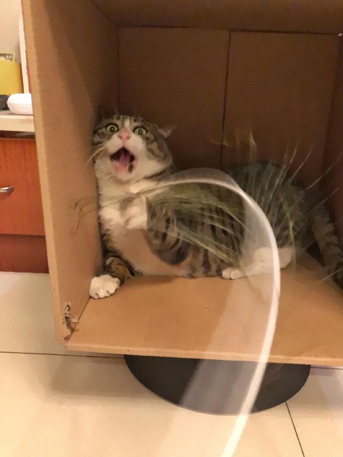 Meet Ah Fei The Cat Who Deserves An Oscar For His