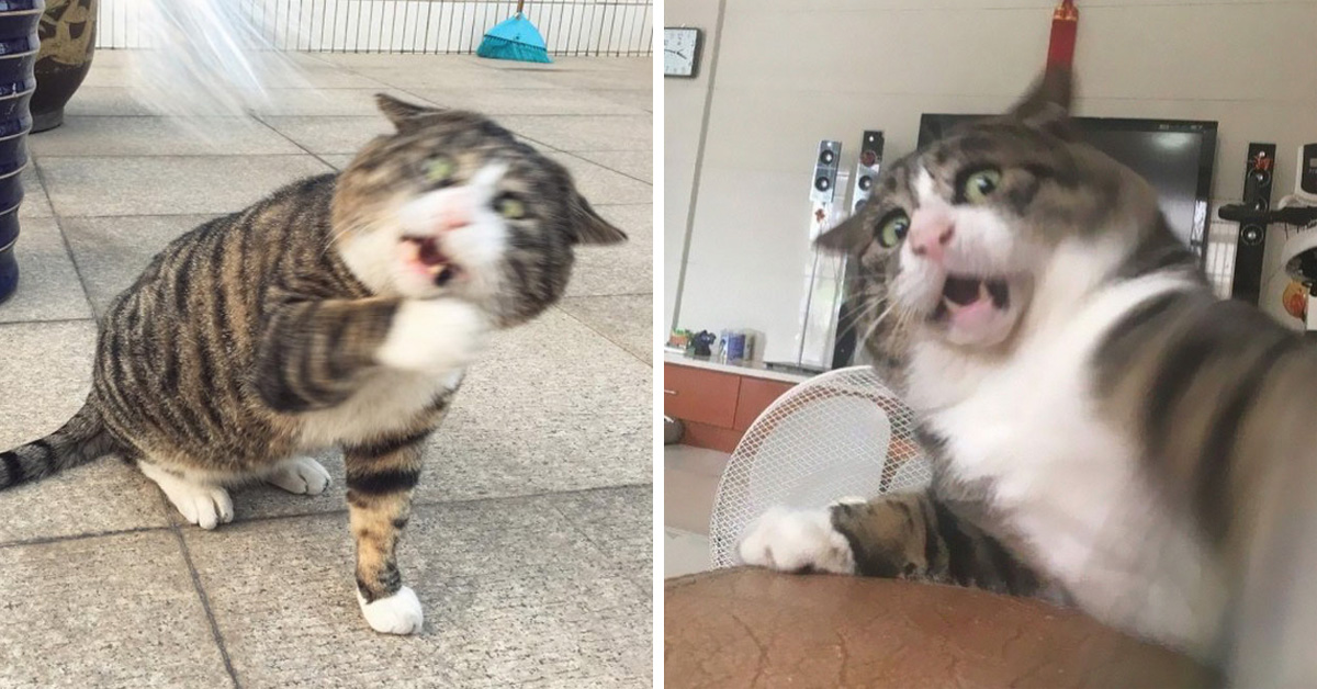 Meet Ah Fei, The Cat Who Deserves An Oscar For His Hilariously Dramatic Reactions