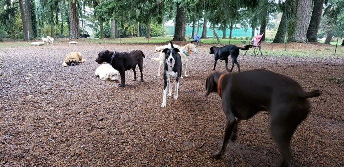 This Doggy School Bus Takes Dogs On Outdoor Play Dates, And