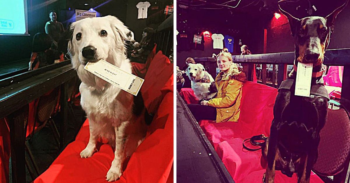 This New Pet-Friendly Movie Theater Lets You Bring Your Dog, And Serves Bottomless Wine