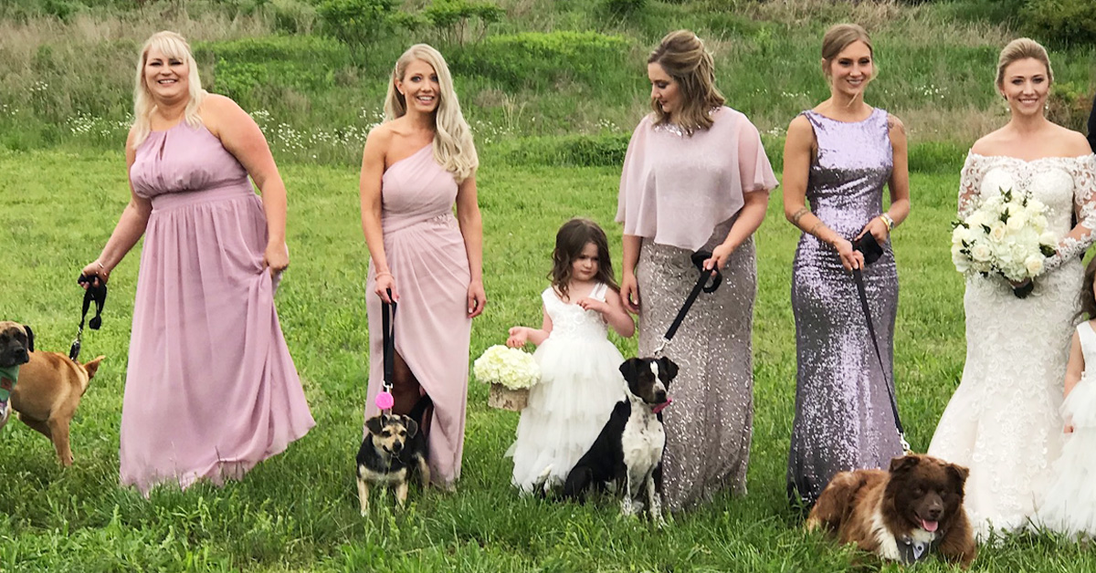Bridesmaids Carry Shelter Dogs Instead Of Bouquets To Help Them Find A Forever Home