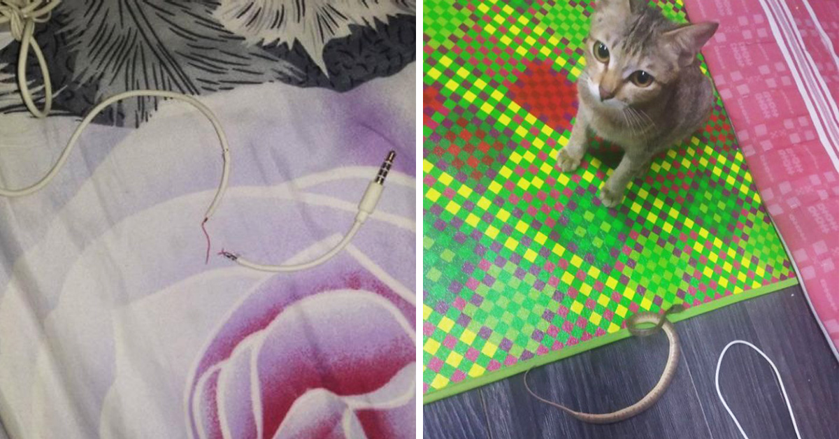 Kitten Breaks His Owner's Earphone Cable And Returns With Snake As A Replacement