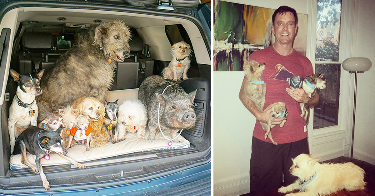 Man Dedicates His Life To Adopting Senior Dogs Who Can't Find A Forever Home
