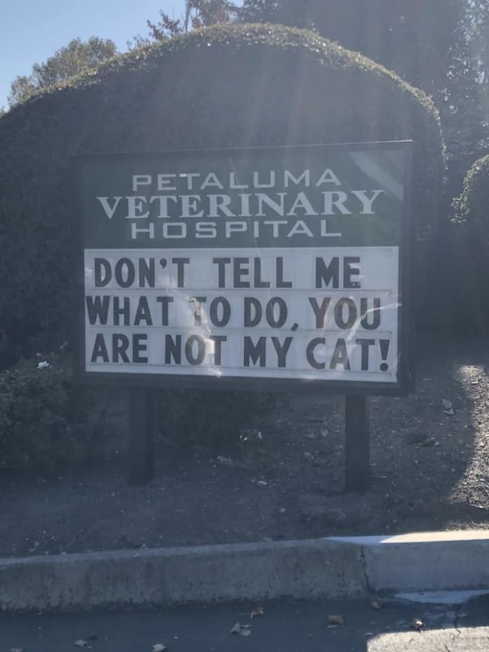 Cats Eyes Road >> 20 Of The Funniest Cat Jokes From Vet Clinic Signs
