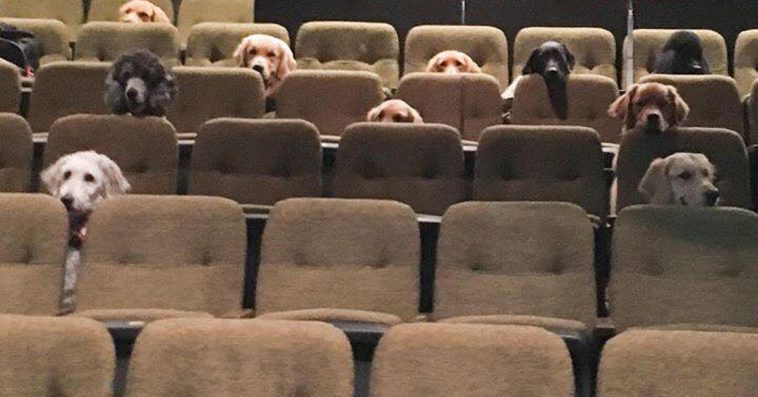 Canadian Service Dogs Had To Watch A Live Musical As Part Of Their Training, And Their Photo Goes Viral