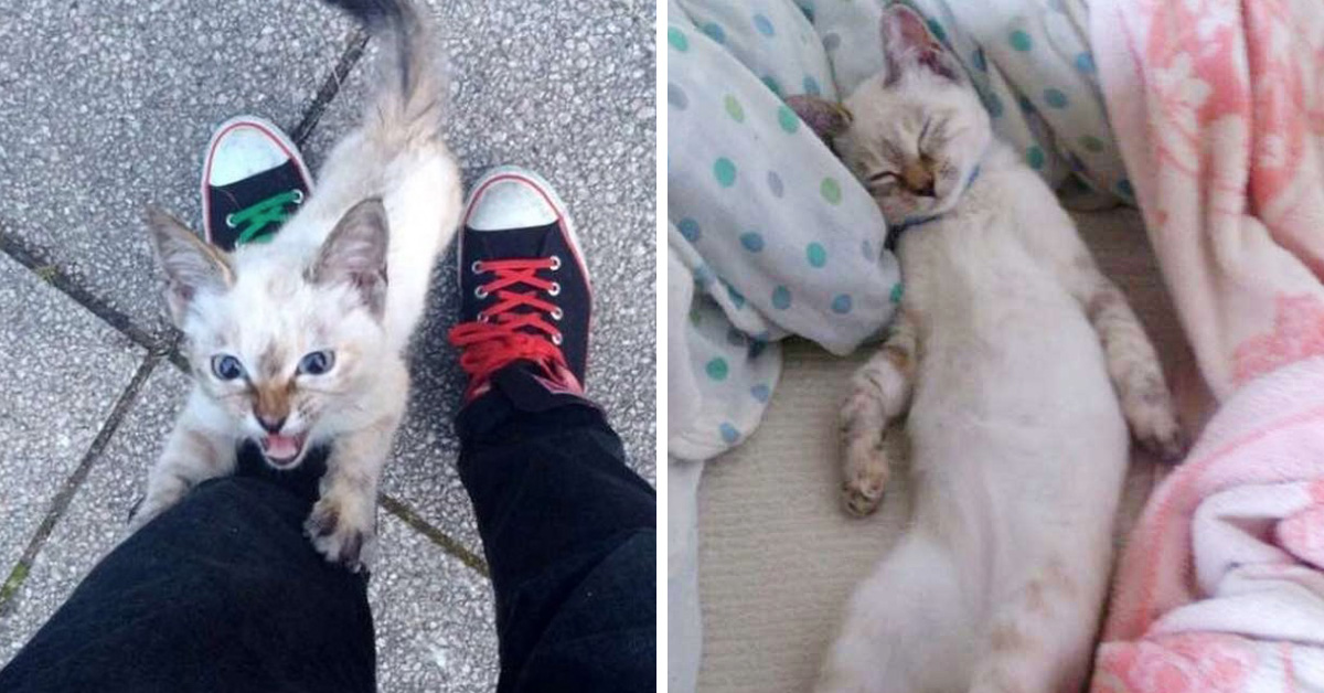 Stray Kitten Chooses His New Dad In A Park, And Wouldn't Let Him Go