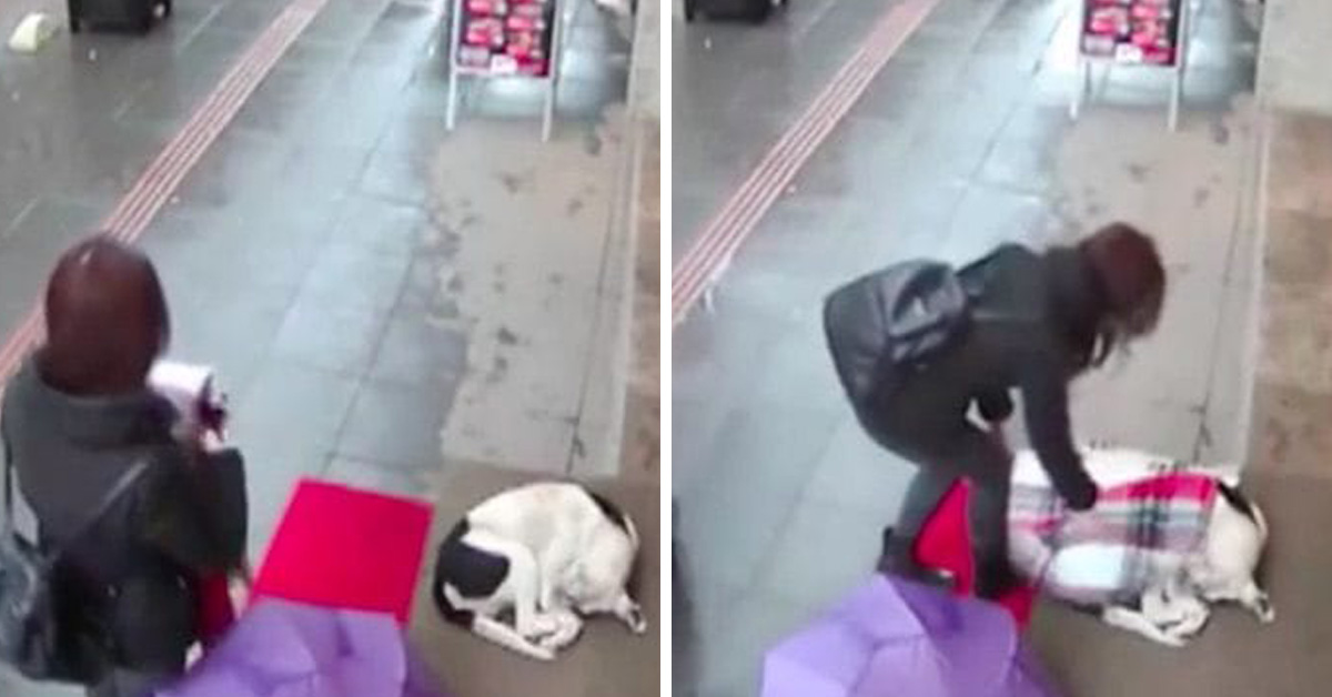 Kind Woman Caught On Camera Giving Her Own Scarf To A Shivering Stray Dog