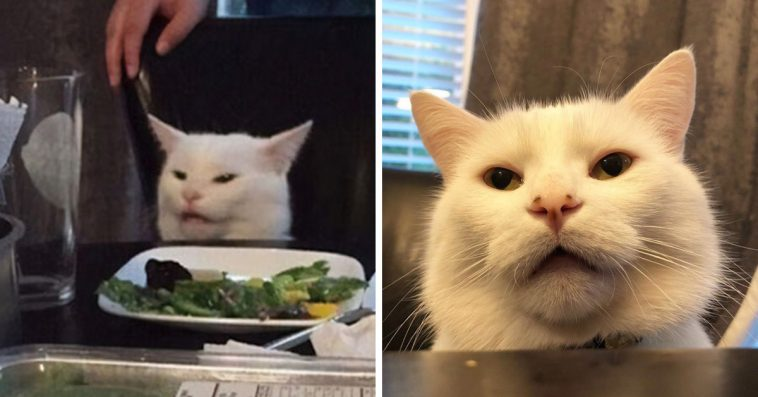 """Meet Smudge, The Confused Cat From The """"Woman Yelling At ..."""