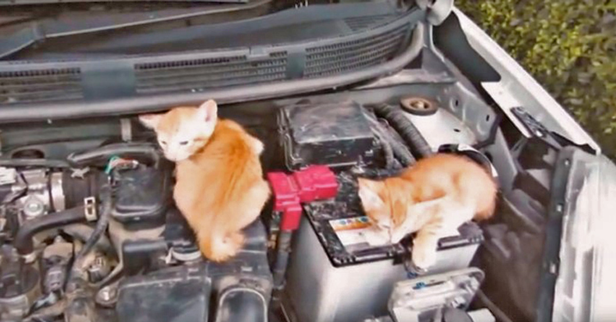 Nissan Reminds Drivers To Knock On The Hood To Check For Sleeping Cats Before Turning The Car On In Wintertime