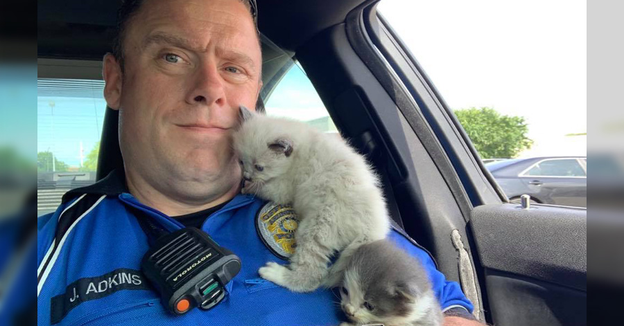 Police Officer Rescues Two Kitten Siblings And They Won't Stop Cuddling With Him