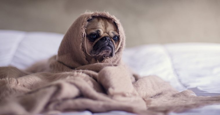 Study Finds Women May Sleep Better With A Dog In Their Bed Instead ...
