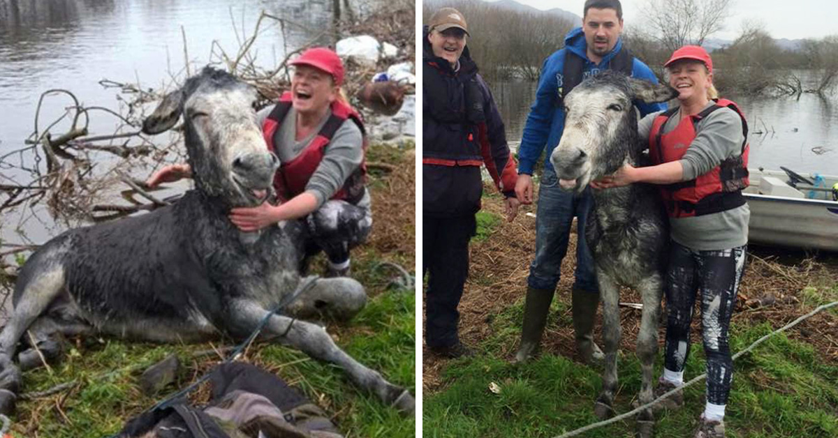 Donkey Gives A Big Smile To The Rescuers Who Just Saved Him From Flood