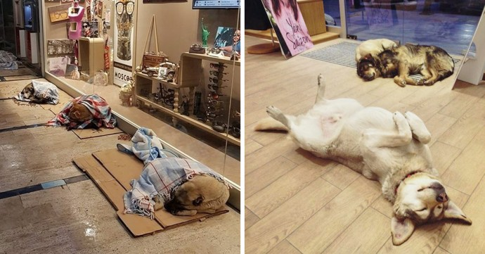 Shop Owners Open Their Doors To Homeless Dogs To Protect Them From Freezing Weather