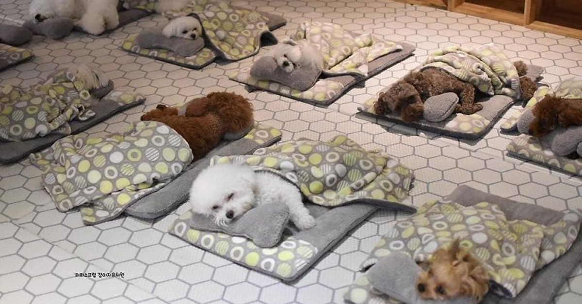 Puppy Daycare Center Posts Adorable Photos Of Pups Sleeping Together, And They Go Viral