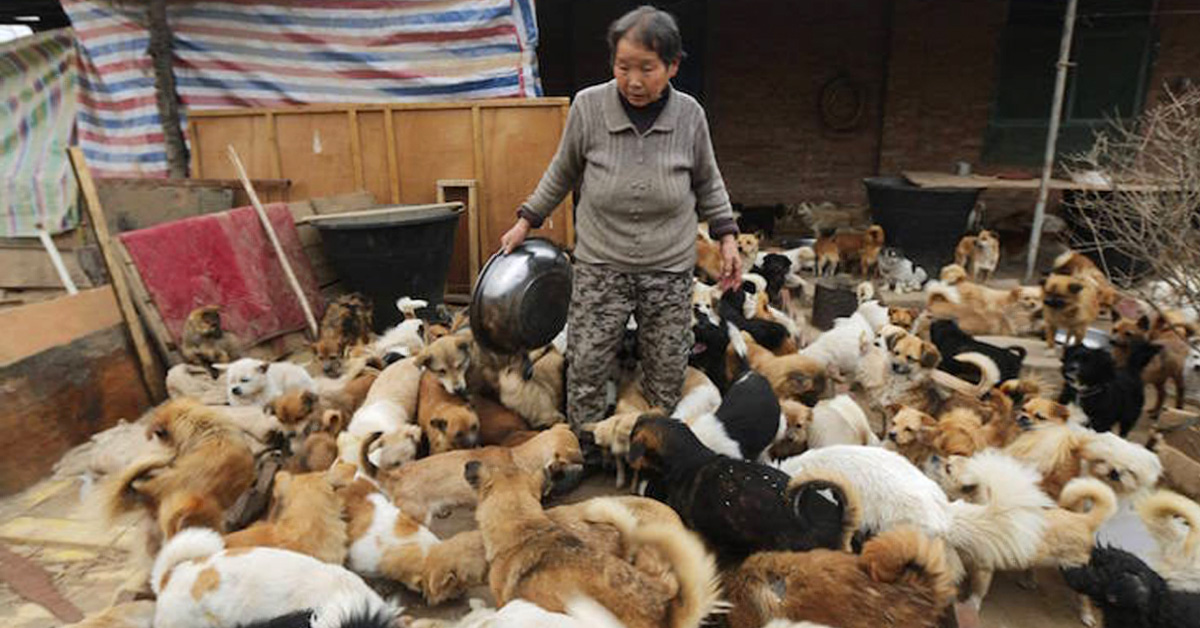Five Elderly Chinese Women Devote Their Lives To Taking Care Of 1,300 Stray Dogs