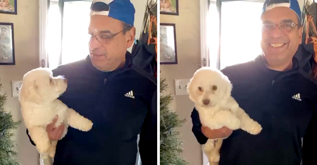Husband Helps Wife By Bringing Dog To The Groomer, Comes Home With The Wrong Dog
