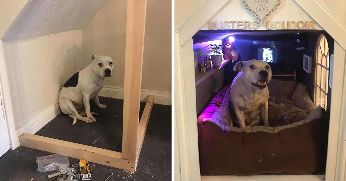 Man Builds His Rescue Dog With Trust Issues A Mini House In The Living Room To Let Him Have Some 'Alone Time'