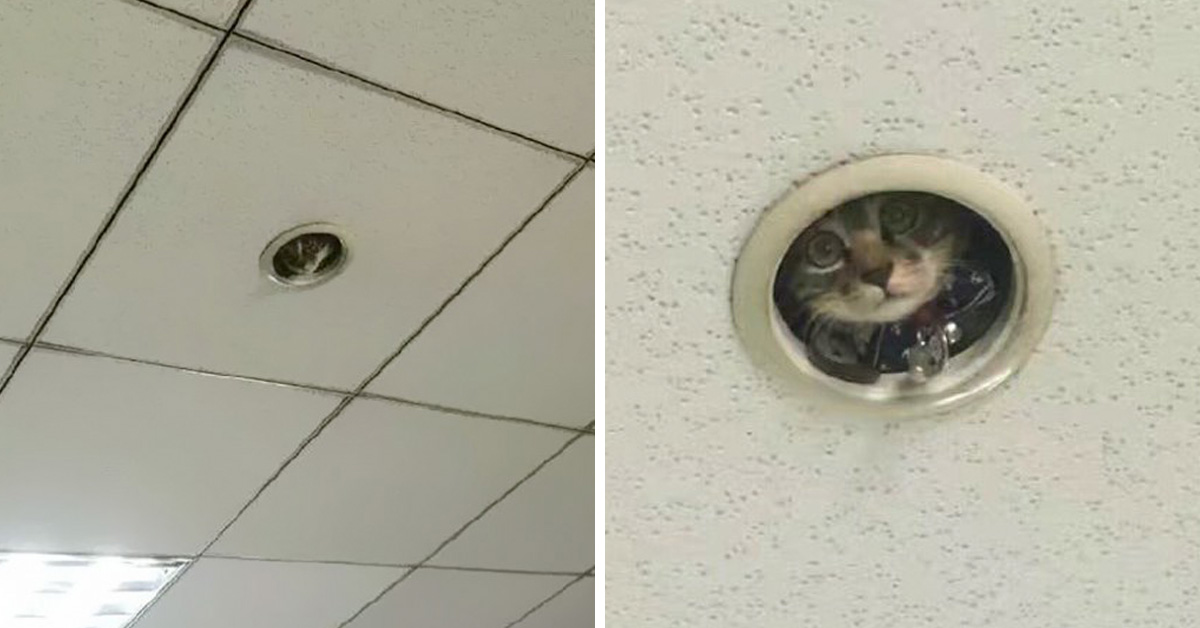 "Office Workers Find Out A Sneaky ""Surveillance Cat"" Has Been Spying On Them"