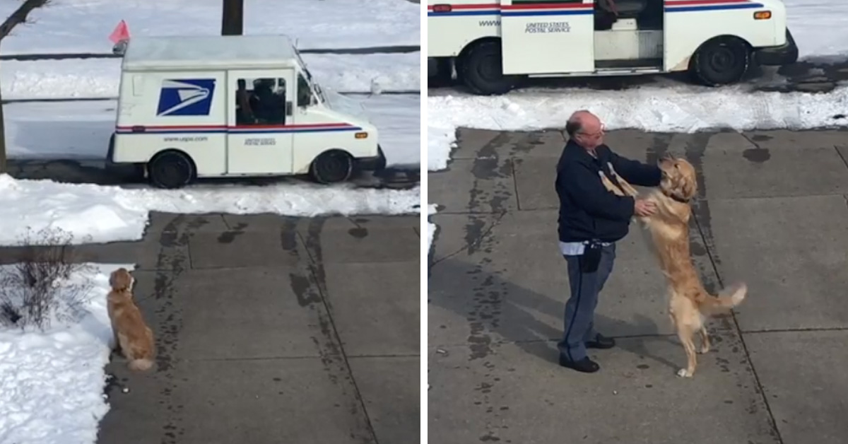 Golden Retriever Patiently Waits Every Day To Get A Hug From His Favorite Mailman