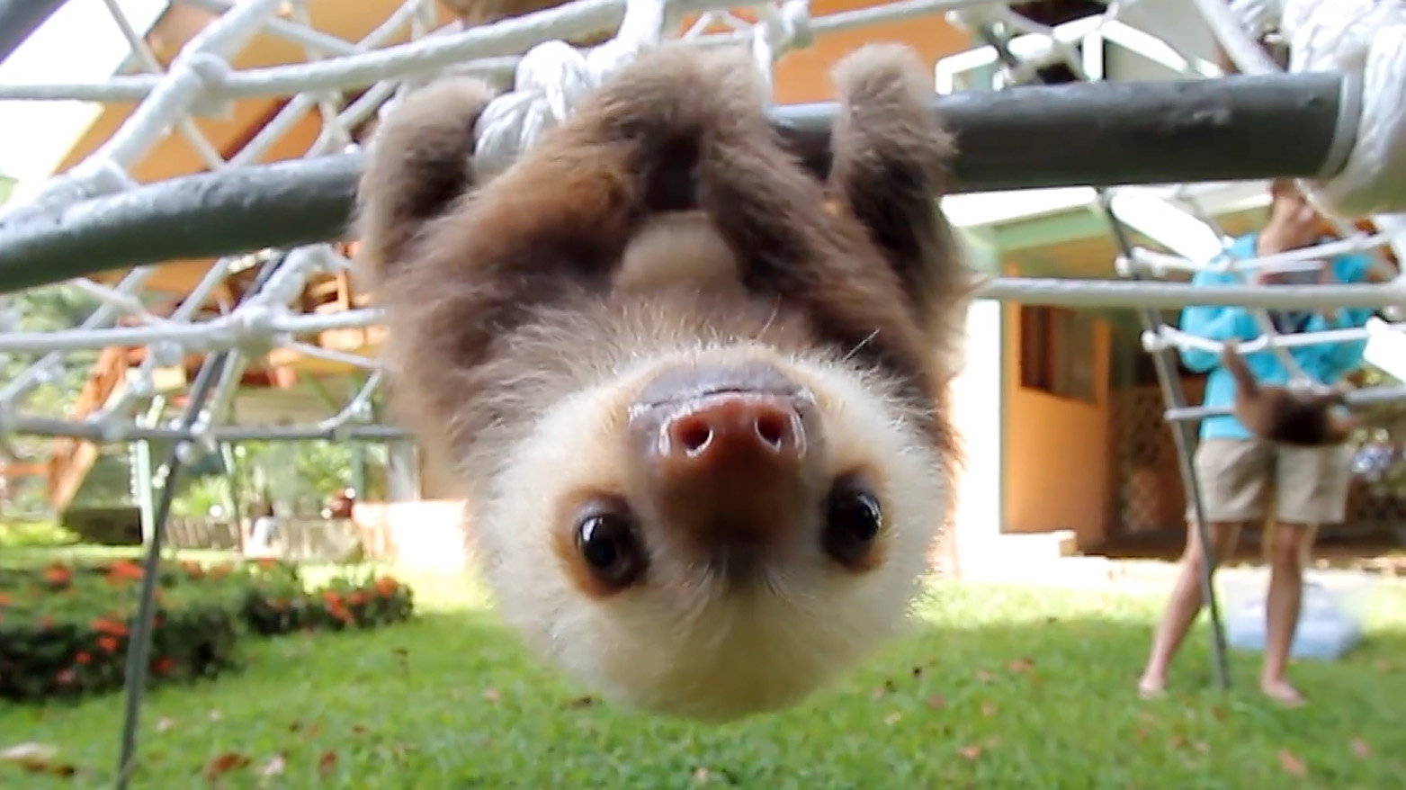 This Group Of Rescue Baby Sloths Has A Squeaky Conversation And It's Just Adorable