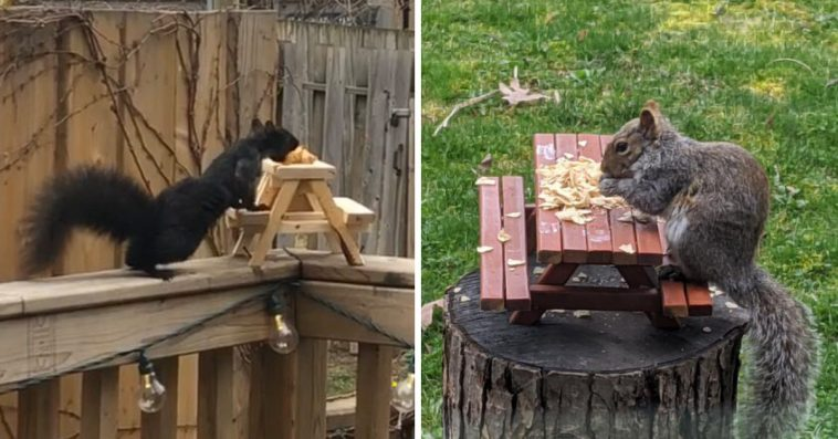 People Are Building Adorably Tiny Picnic Tables For Squirrels So