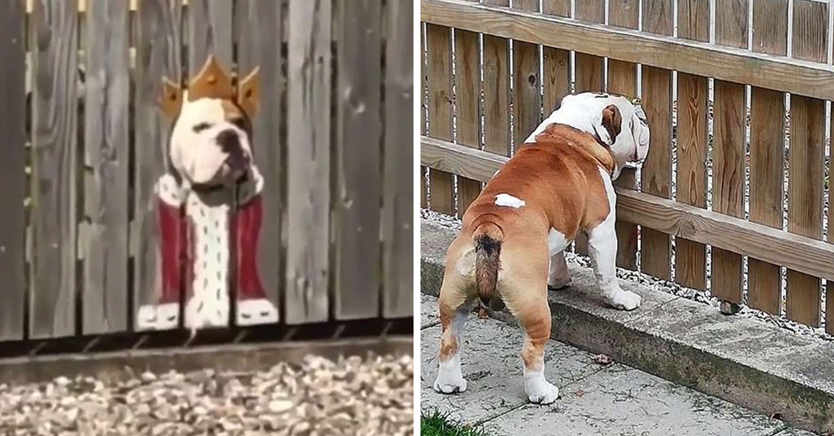 Bulldog Loves To Stick His Head Through The Fence, So His Owners Paint A Costume To Make Him The King Of The Street