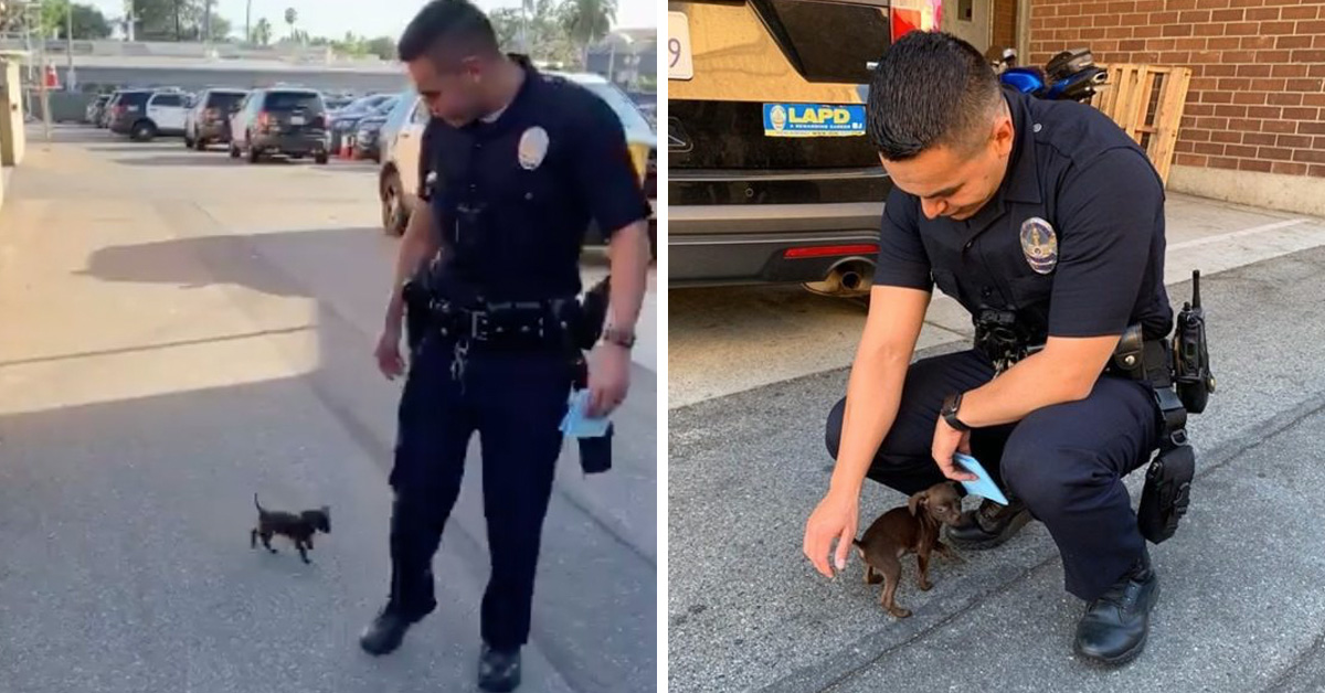 Tiny Abandoned Puppy Chases Cop Down The Street And Begs To Be Adopted