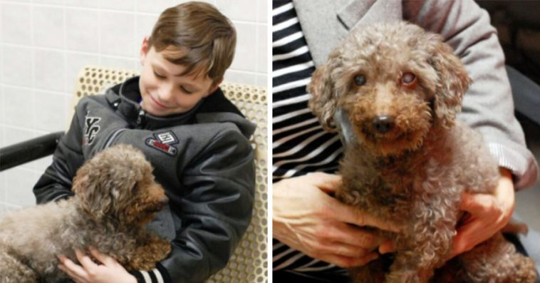 Young Boy Goes To The Shelter And Picks The Oldest Dog As His New ...