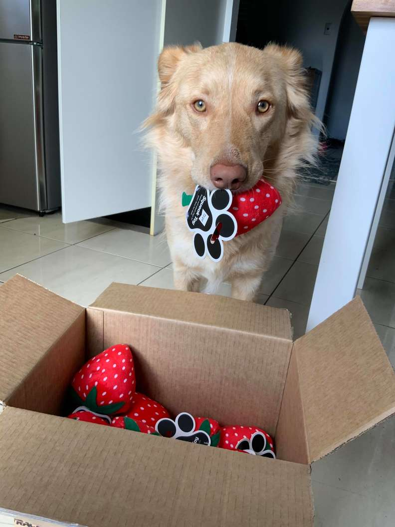 Dog's Favorite Toy Gets Discontinued So Store Sends The Last Box To Him