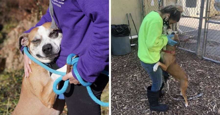 Dog Is So Grateful To Be Rescued He Can't Stop Hugging Every Human He Meets