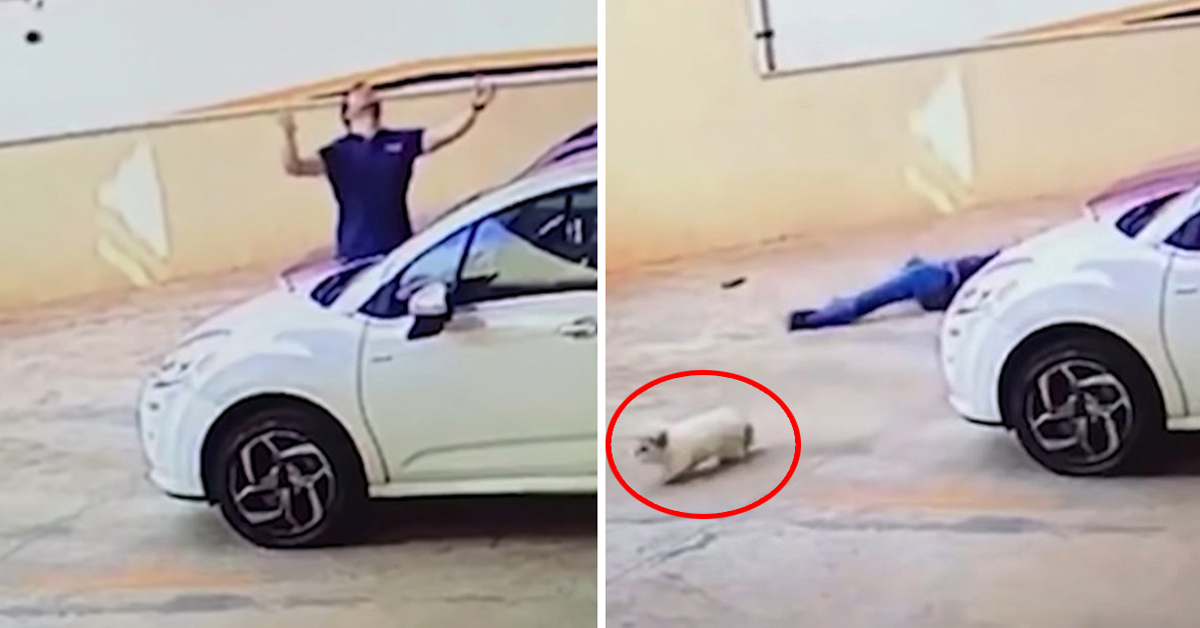 Passerby Caught On Camera Catching A Dog Falling From 9th Floor And Saving Her Life