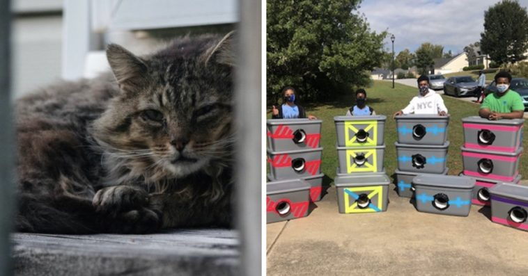 Boy Scouts Save Stray Cats From Winter Weather By Creating Shelters From Storage Totes
